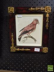 Sale 8407T - Lot 2023 - Richard Polydore Nodder (active 1795 - 1820) - Plate 945 (from The Naturalists Miscellany) 14 x 11cm
