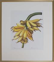 Sale 8422A - Lot 95 - An antique style horticultural print of bananas, Bananier Cultive, 50 x 30cm