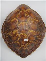 Sale 8431A - Lot 674 - Antique Sea Turtle Shell 46cm x 42cm