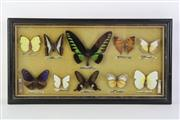 Sale 8818N - Lot 670 - Framed Butterfly Display (45cm x 24cm)