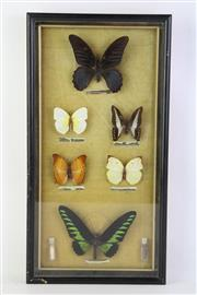 Sale 8818N - Lot 671 - Framed Butterfly Display (45cm x 24cm)