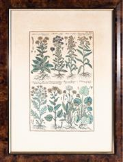 Sale 8644A - Lot 101 - Three framed botanical prints including Fungus, artist unknown, Herbs by J.V. Morandi, and another, in walnut frames, largest frame...