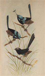 Sale 9084 - Lot 576 - Neville Cayley (1886 - 1950) - Blue Wrens 27.5 x 17.5 cm (frame: 55 x 45 x 3 cm)