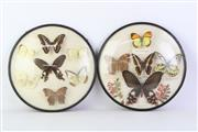 Sale 8818N - Lot 697 - Pair Of Circular Framed Butterfly Displays Dia 25cm