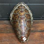 Sale 8758 - Lot 54C - Sea Turtle Shell