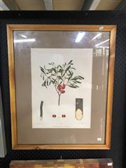 Sale 8903 - Lot 2077 - JE Brown & RC Fiveash - Dodonae Viscosa (Sticky Hop Bush), from The Forest of South Australia, HF Leader Govt Printer 74x50cm