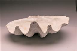 Sale 9134H - Lot 70 - A large composite clam shell, Length 67cm x Width 40cm