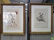 Sale 8598 - Lot 1018 - Two Engraved & Hand Coloured Botanical Studies, in the 18th century style, titled in German & French