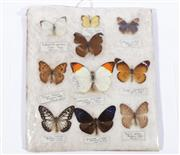 Sale 9003C - Lot 673 - Mounted Butterfly display