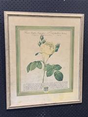 Sale 9041 - Lot 2057 - A Botanical Decorative Print, 65 x 55cm