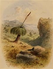 Sale 8606 - Lot 569 - Samuel Thomas Gill (1818 - 1880) - Grass Tree, c1868 15.5 x 12cm