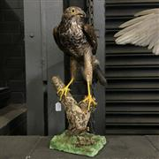 Sale 8758 - Lot 60G - Taxidermy Buzzard on Stand
