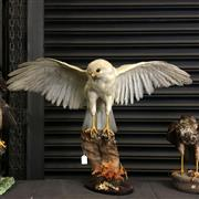 Sale 8758 - Lot 60F - Taxidermy White Hawk on Stand