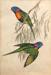 Sale 8606 - Lot 588 - John Gould (1804 - 1881) - TRICHOGLOSSUS RUBRITORQUIS: Vigs & Horsf 51 x 34.5cm