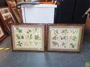 Sale 8595 - Lot 2075 - Pair of Botanical Works