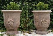 Sale 8950G - Lot 41 - Pair of washed terracotta planters. 51cm height not including plants 43cm diameter