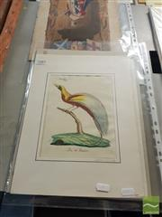 Sale 8552 - Lot 2085 - Quantity of Hand-Coloured Flora & Fauna Prints by Various Artists (various sizes)