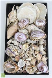 Sale 8490 - Lot 98 - Collection of Various Shells