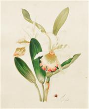 Sale 8867A - Lot 5101 - Vittorio Guidotti (3 works) - Lillies & Camellia (c.1930) each 35.5 x 25.5cm