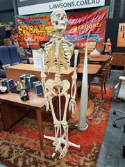 Sale 8822 - Lot 1063 - Medical Display Skeleton on Stand