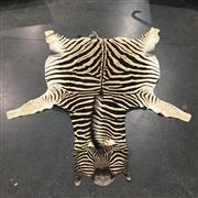Sale 8758 - Lot 53B - Zebra Skin
