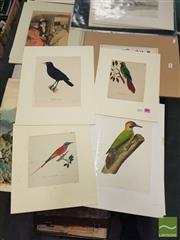 Sale 8552 - Lot 2076 - Quantity of (4) Hand-Coloured Engravings incl Original Illustrations (2) of Birds (various sizes)