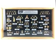 Sale 8758 - Lot 46 - Fossil Shark Teeth Display in Frame, Morocco (48.5 x 28.5 x 3.5cm)
