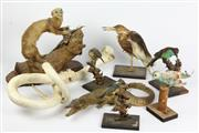 Sale 8384 - Lot 51 - Taxidermy Alligator with Other Taxidermy incl. Birds (AF) -