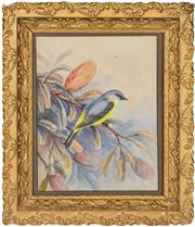 Sale 8344 - Lot 595 - Neville William Cayley (1886 - 1950) - Bird on Banskia 28.5 x 23cm