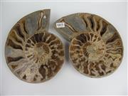 Sale 8431A - Lot 603 - Cleoniceras Ammonite (Jurassic Period), Madagascar