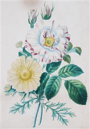 Sale 8901A - Lot 5054 - After. Pierre Joseph Redouté (1759-1840) - Rosa Gallica et Dalhia & Tulip, Narcissus et Jacinthe dOrient (c.1880) 46 x 33 cm, each
