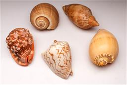 Sale 9110 - Lot 56 - A Collection of shells inc melon