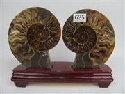 Sale 8431A - Lot 625 - Cleoniceras Ammonite on Wood Stand (Jurassic Period), Madagascar