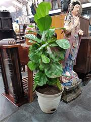 Sale 8700 - Lot 1052 - Potted Indoor Fig Tree
