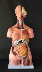 Sale 8706A - Lot 66 - An anatomical medical model unisex, interchangeable parts, made from plastic, general wear, H 85cm