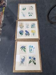Sale 9011 - Lot 2085A - 3 Botanical Studies