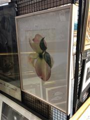 Sale 8797 - Lot 2020 - Warwick Orme - Dogwood Back photographs, 71 x 53cm (frame), signed