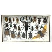 Sale 8758 - Lot 47 - Assortment of Insects, framed