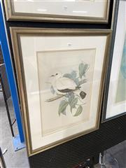 Sale 8878 - Lot 2064 - John Gould,  White Imperial Pigeon (Carpophage Luctuosa), Hand coloured lithograph, printed by Hullmandel and Walter, 74.5 x 56.5 cm