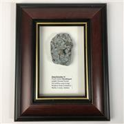 Sale 8758 - Lot 48 - Framed Fossil, USA