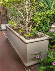 Sale 9070H - Lot 3 - A pair of oversized composite rectangular planters, planted with trees, height of planter 45cm x Width 150cm x Depth 43cm