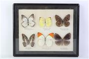 Sale 8818N - Lot 609 - Framed Butterfly Display (26cm x 32cm)
