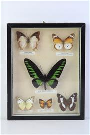 Sale 8818N - Lot 727 - Framed Butterfly Display (26cm x 20cm)