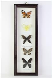 Sale 8818N - Lot 726 - Framed Butterfly Display (51cm x 17cm)