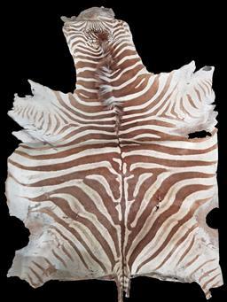 Sale 9137 - Lot 1018 - Vintage full Zebra pelt (245 x 145cm)