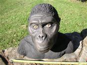 Sale 7905A - Lot 1680 - Australopithecus - Museum Replica