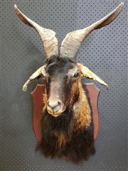 Sale 8988 - Lot 1091 - Black Taxidermy Mountain Goat Trophy Mount