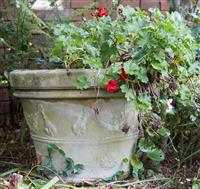Sale 9080H - Lot 8 - A tapering oversized planter, with big red geranium. Height 53cm x Diameter 71cm