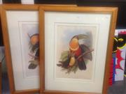 Sale 8655 - Lot 2063 - Set of 4 John Gould Bird Prints, frame 86 x 67cm