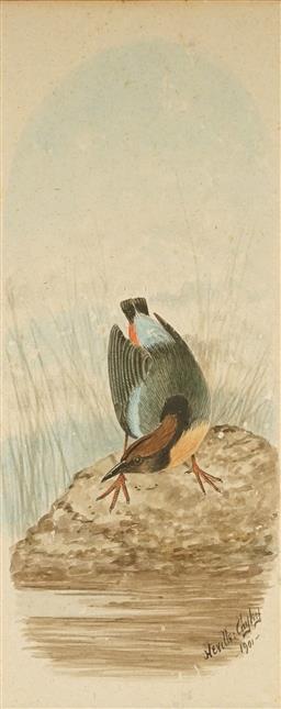 Sale 9084 - Lot 577 - Neville Cayley Snr (1853 - 1903) - Waterbird, 1901 24.5 x 9.5 cm (frame: 48 x 32 x 2 cm)